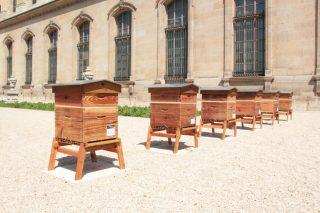Installation de six ruches   Paris Capitale