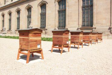 Installation de six ruches au domaine des Tuileries