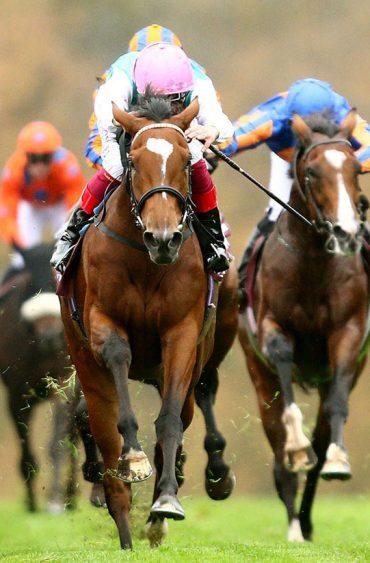 Epic horse race:
