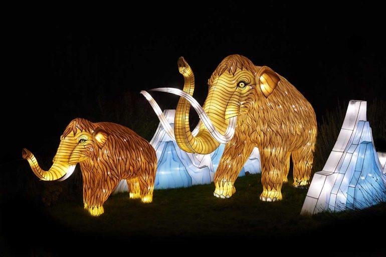 An enlightening animal parade