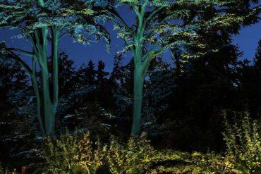 Le jardin du musée Albert Kahn de nouveau ouvert au public
