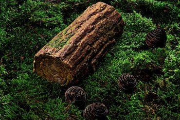 Plaza Athénée L'appel de la forêt