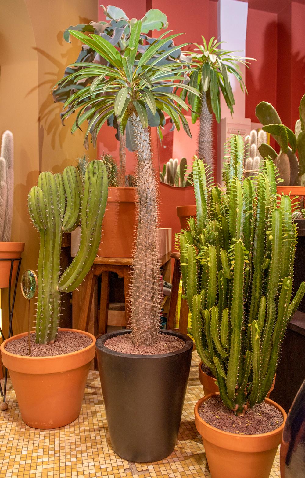 fleuriste-parisien-succulents-cactus-3