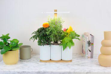 Fête des Mères 2021, un bouquet de fleurs locales et durables