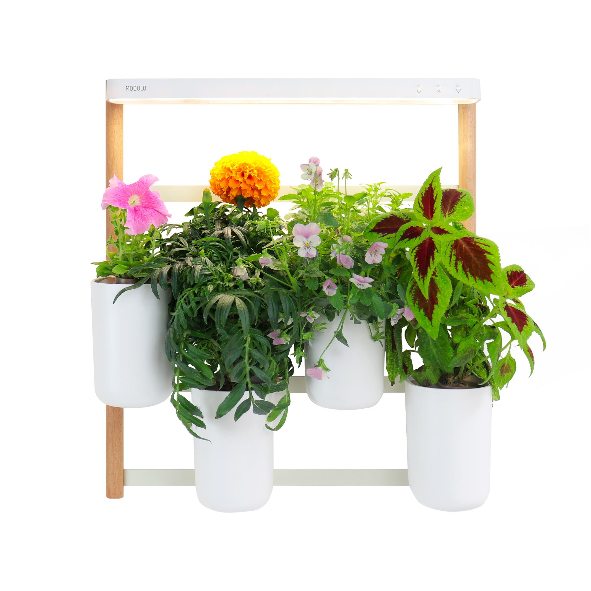 prêt-à-pousser-fleurs-cadeaux
