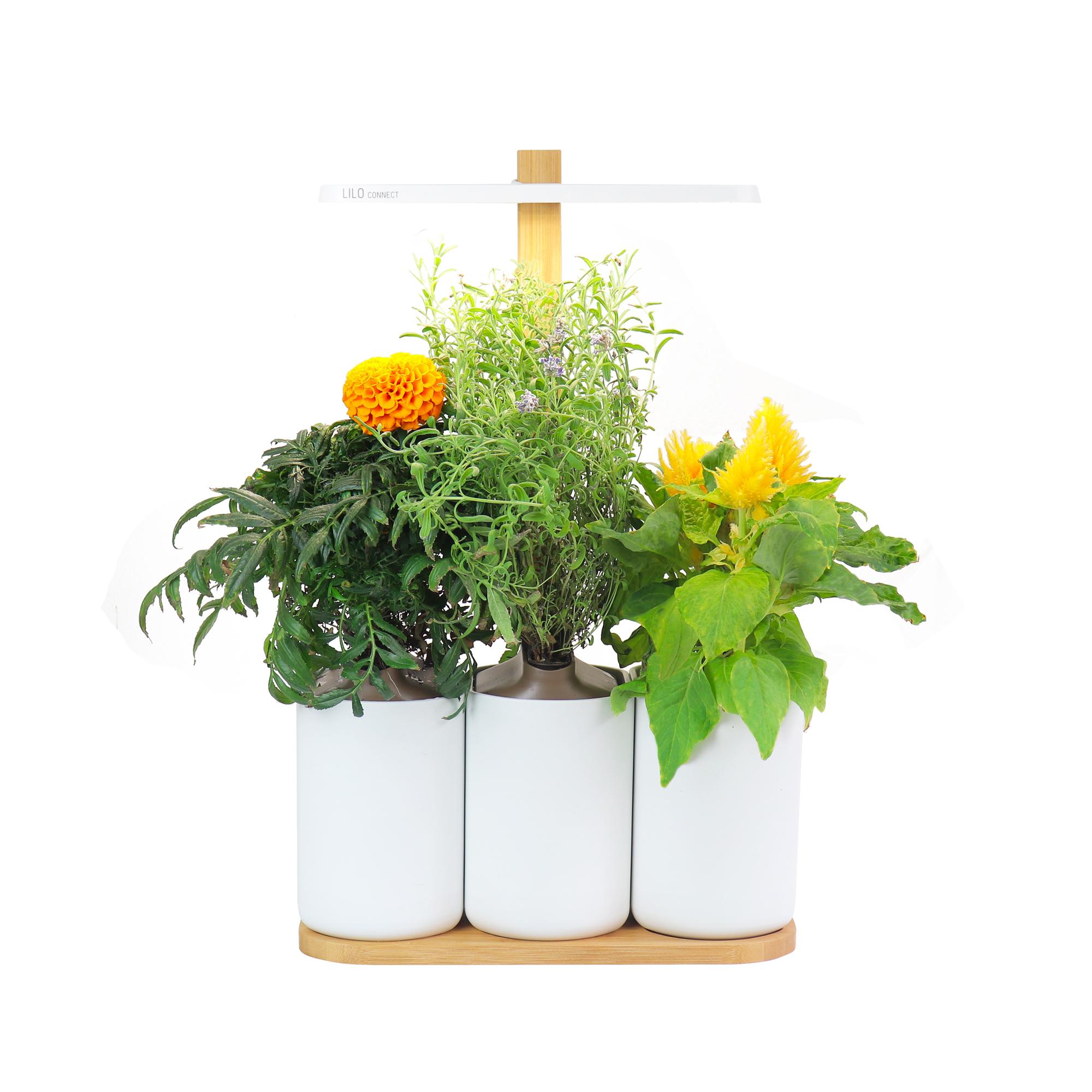 prêt-à-pousser-fleurs-fête-des-mères