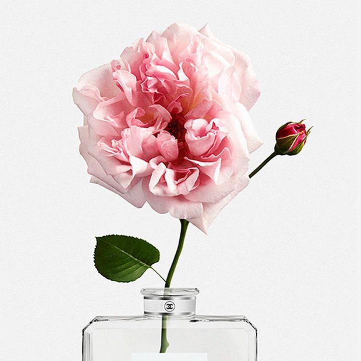 Chanel-rose-symbole-parfum-paris